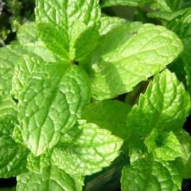 Aromatiques et condimentaires
