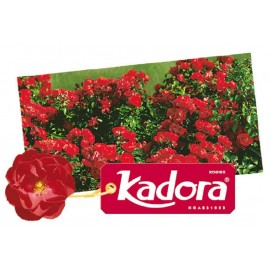 ROSIER Kadora ®